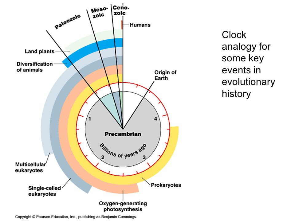 Clock analogy for some key events in evolutionary history