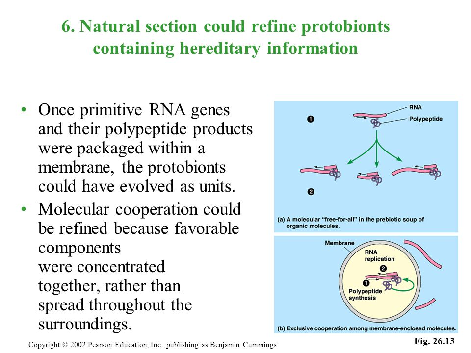 6. Natural section could refine protobionts containing hereditary information