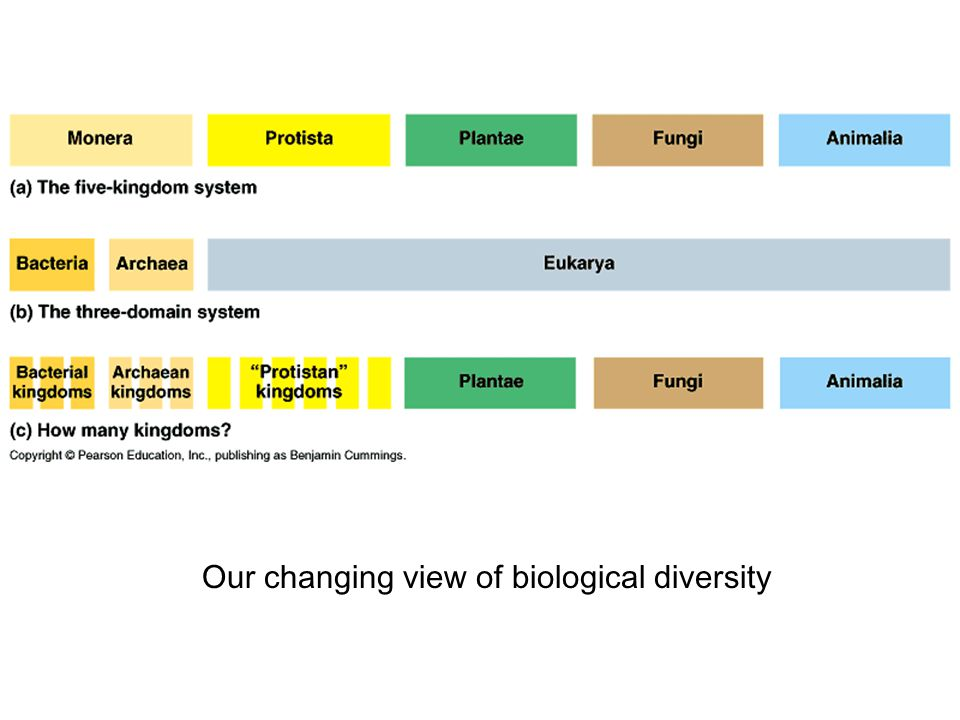 Our changing view of biological diversity