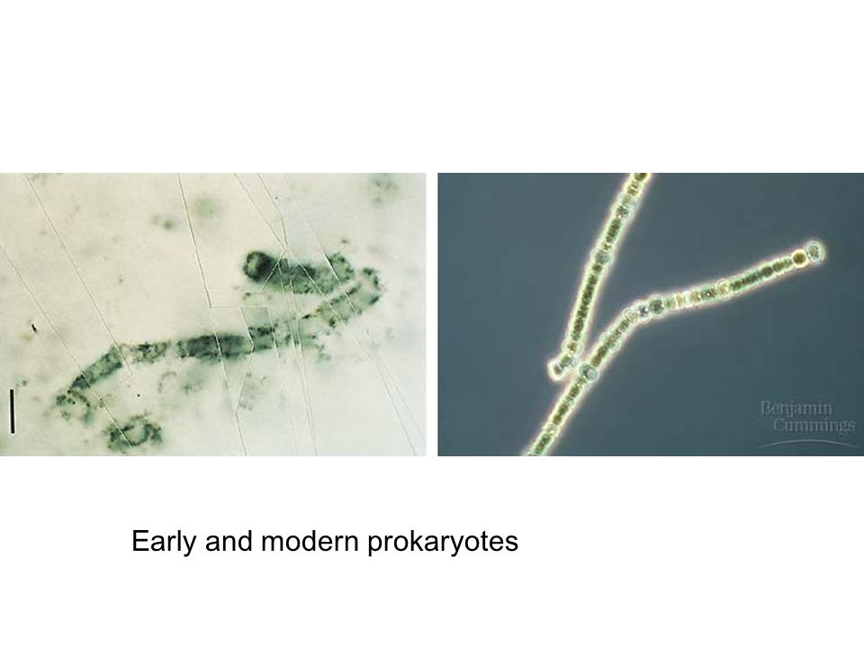 Early and modern prokaryotes