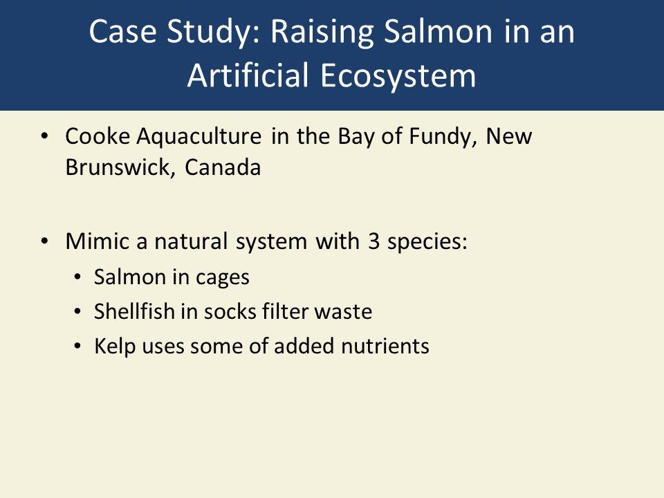 Case Study: Raising Salmon in an Artificial Ecosystem
