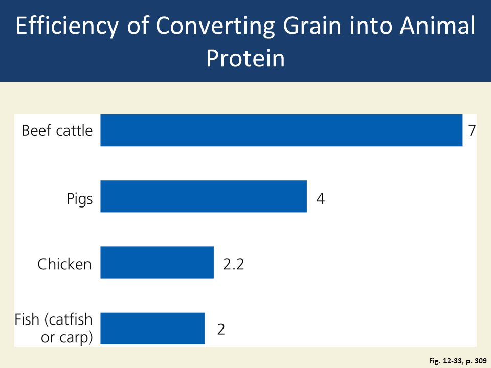 Efficiency of Converting Grain into Animal Protein