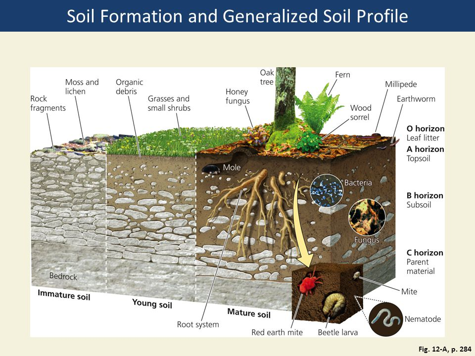 Chapter 12 food soil and pest management ppt download for Soil composition definition