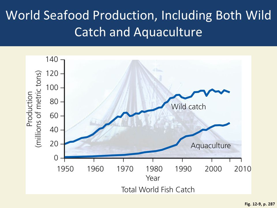 World Seafood Production, Including Both Wild Catch and Aquaculture