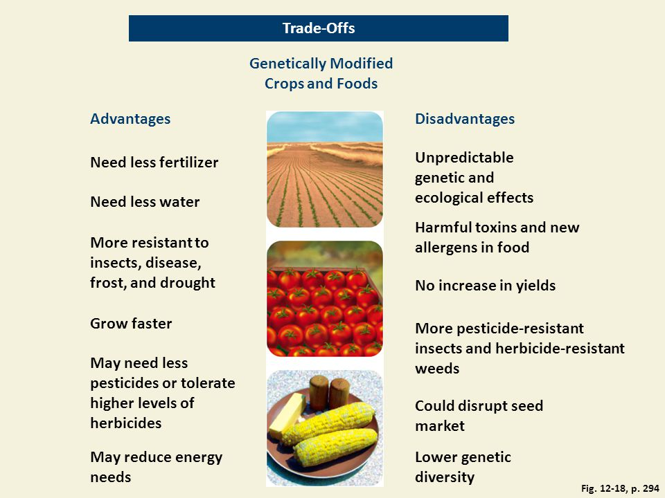 Genetically Modified Crops and Foods