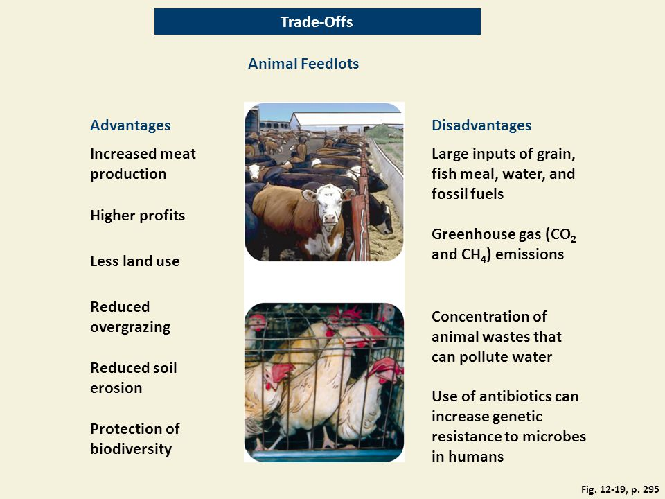 Increased meat production