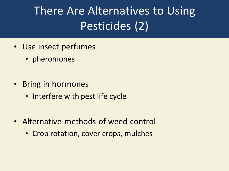 There Are Alternatives to Using Pesticides (2)
