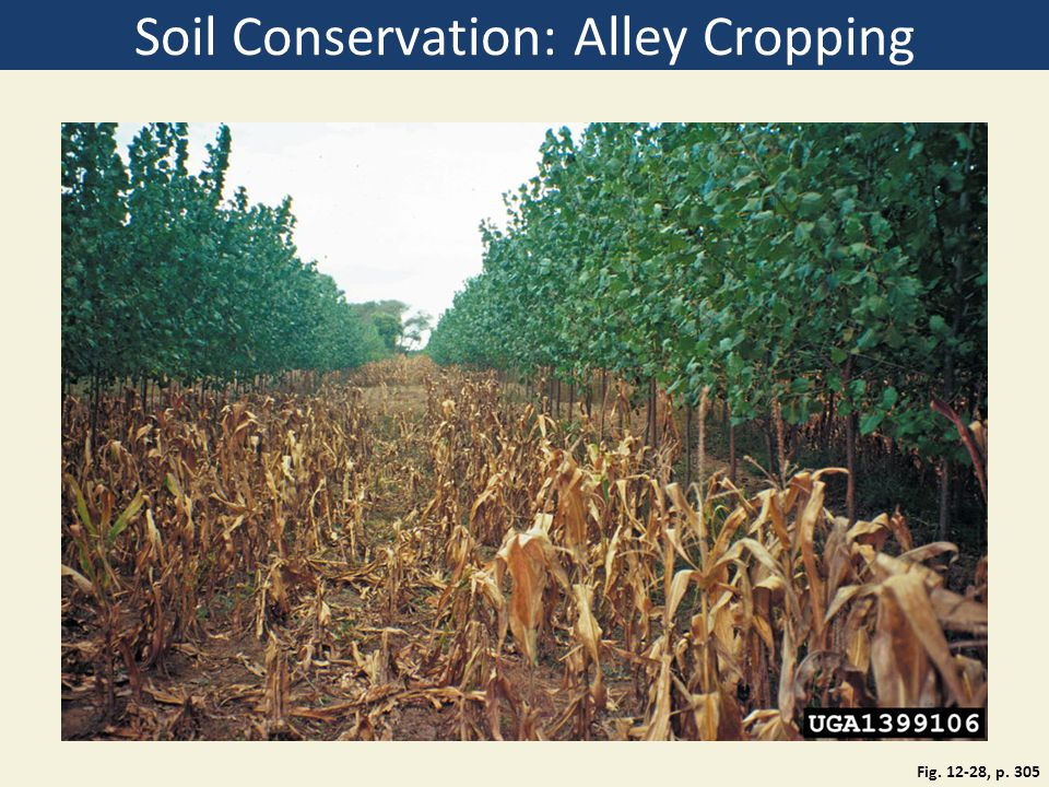 Soil Conservation: Alley Cropping