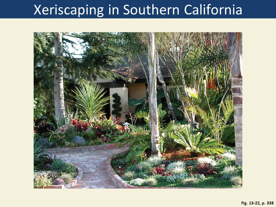 Xeriscaping in Southern California
