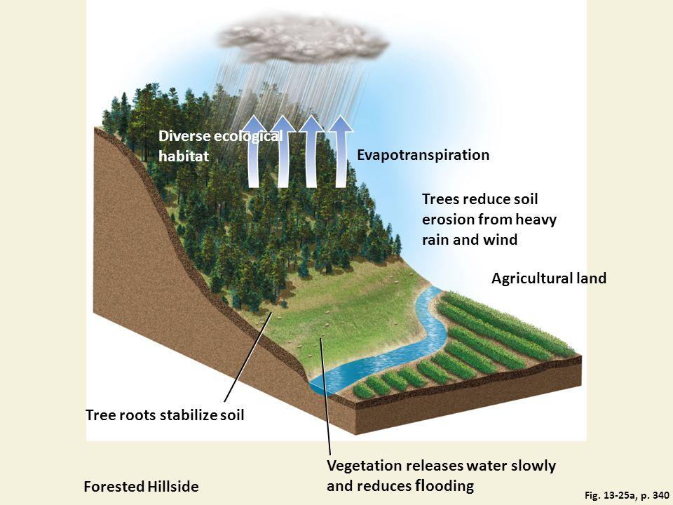 Diverse ecological habitat Evapotranspiration
