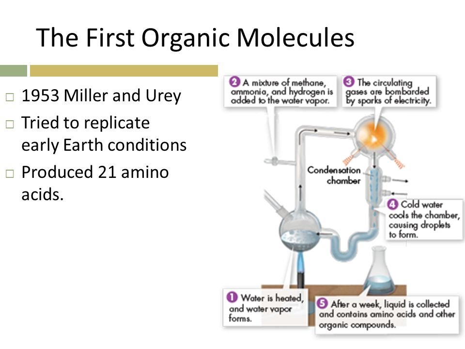 The First Organic Molecules