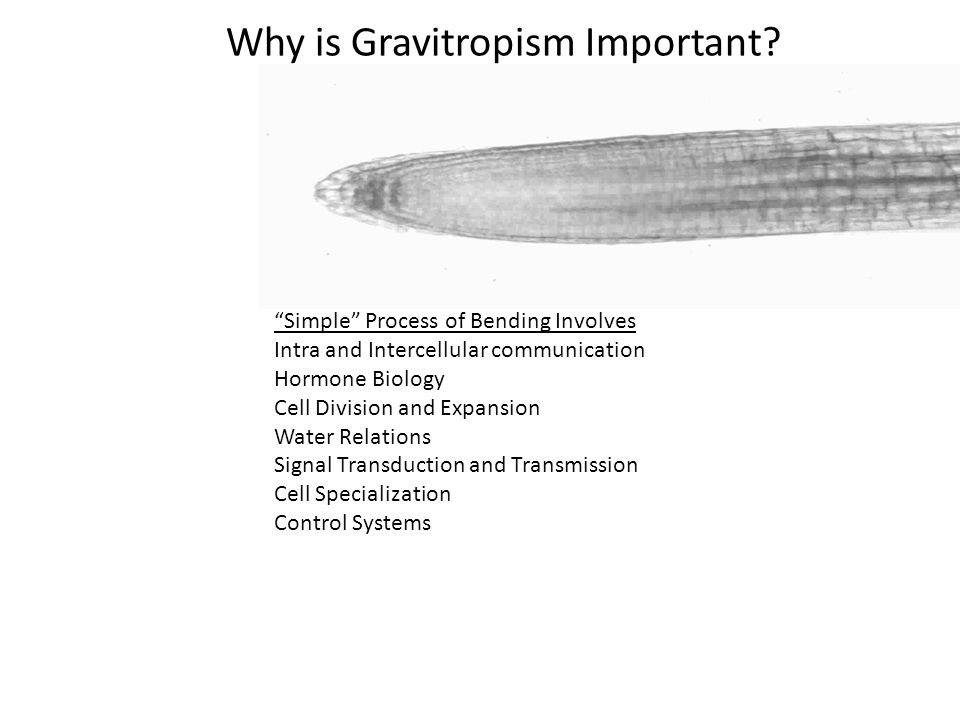 Why is Gravitropism Important