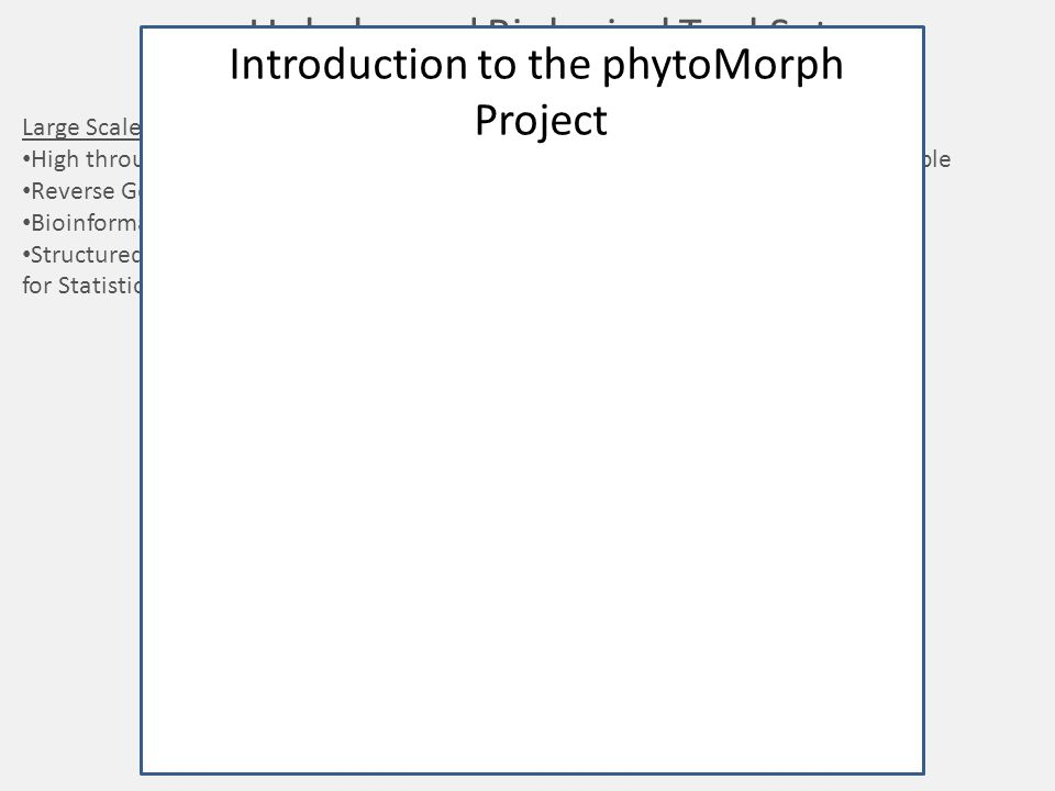 Introduction to the phytoMorph