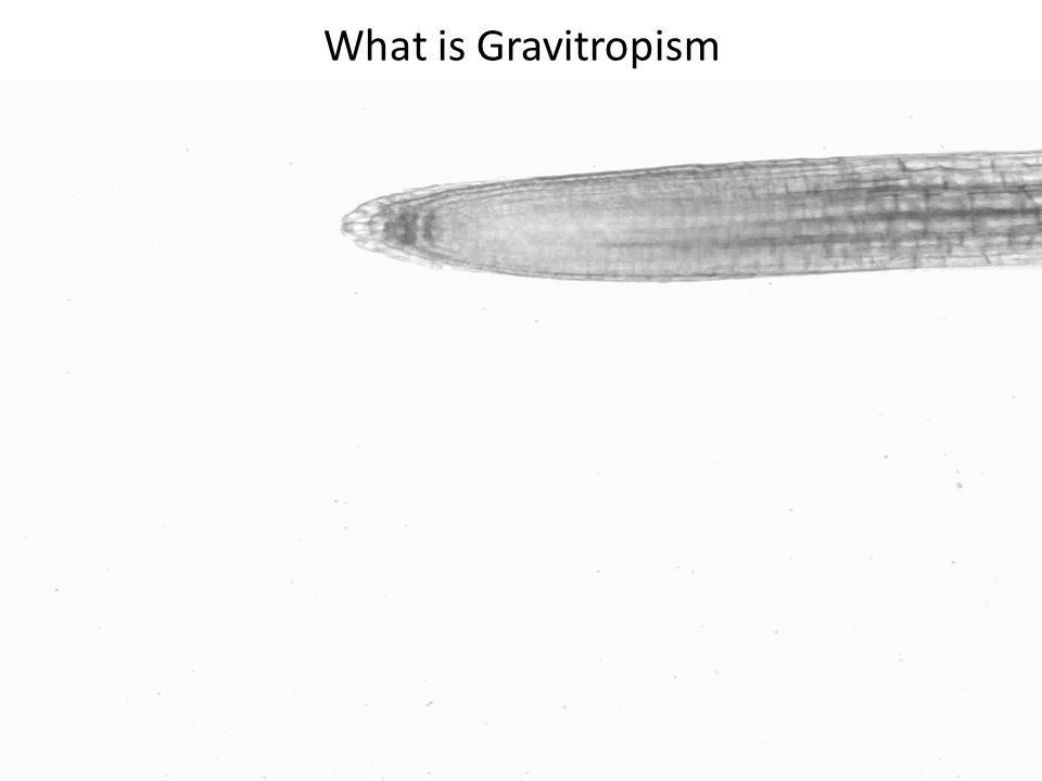 What is Gravitropism Initial training as an engineer, so I have a focus on the problem statement .