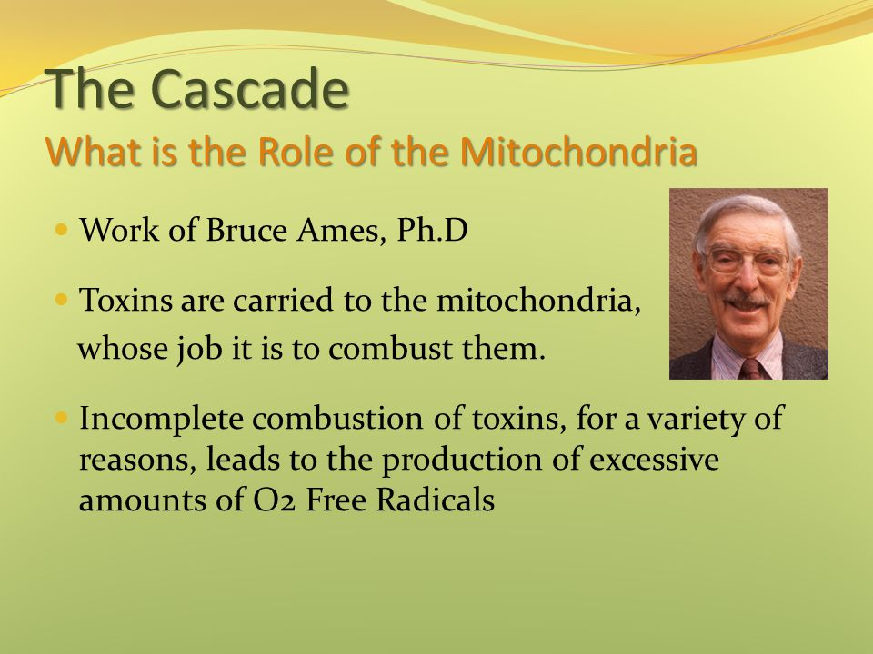 The Cascade What is the Role of the Mitochondria