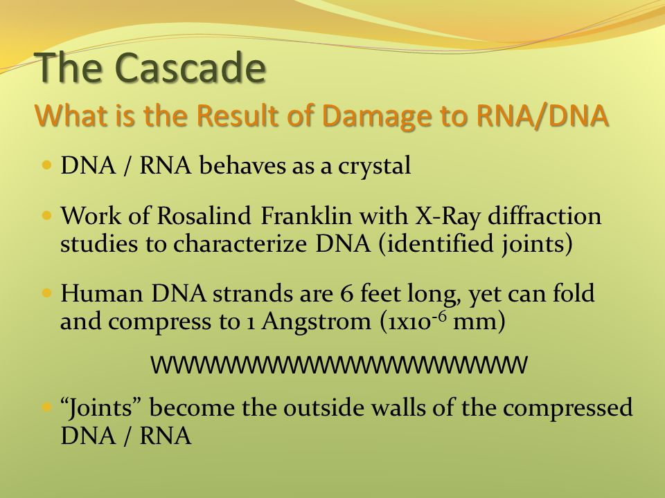 The Cascade What is the Result of Damage to RNA/DNA