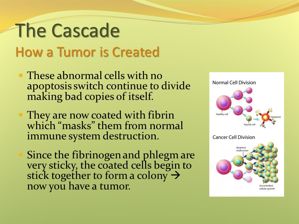 The Cascade How a Tumor is Created