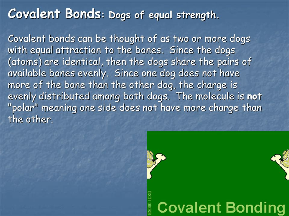 Covalent Bonds: Dogs of equal strength.