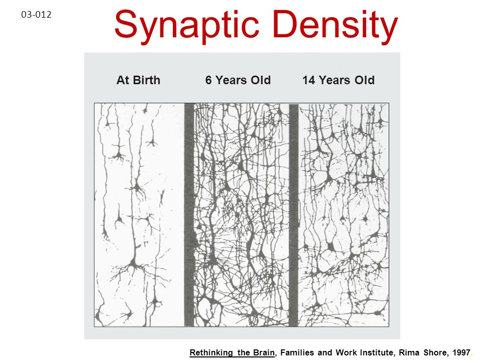 Synaptic Density At Birth 6 Years Old 14 Years Old 03-012