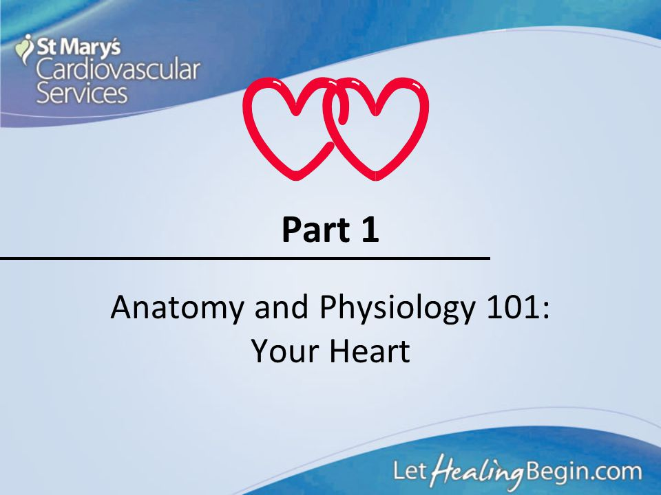 Anatomy and Physiology 101: Your Heart