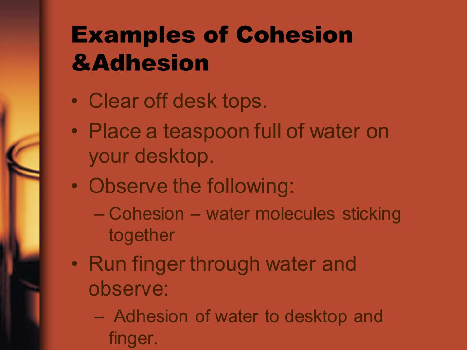 Examples of Cohesion &Adhesion