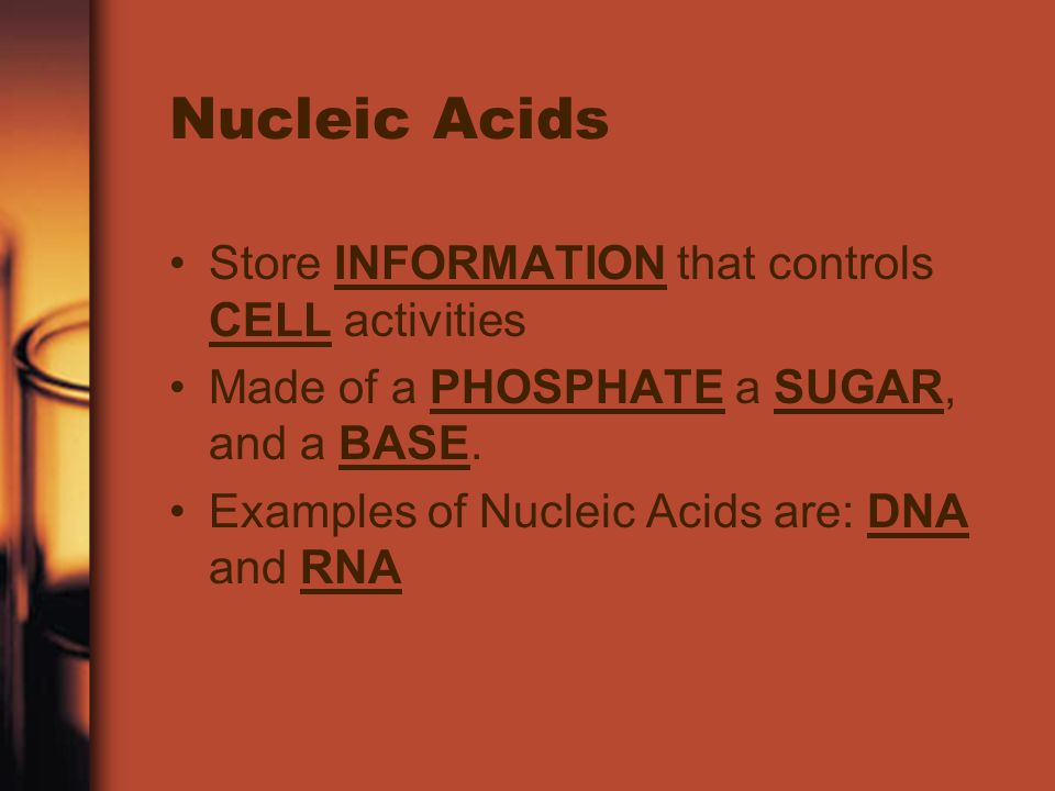 Nucleic Acids Store INFORMATION that controls CELL activities