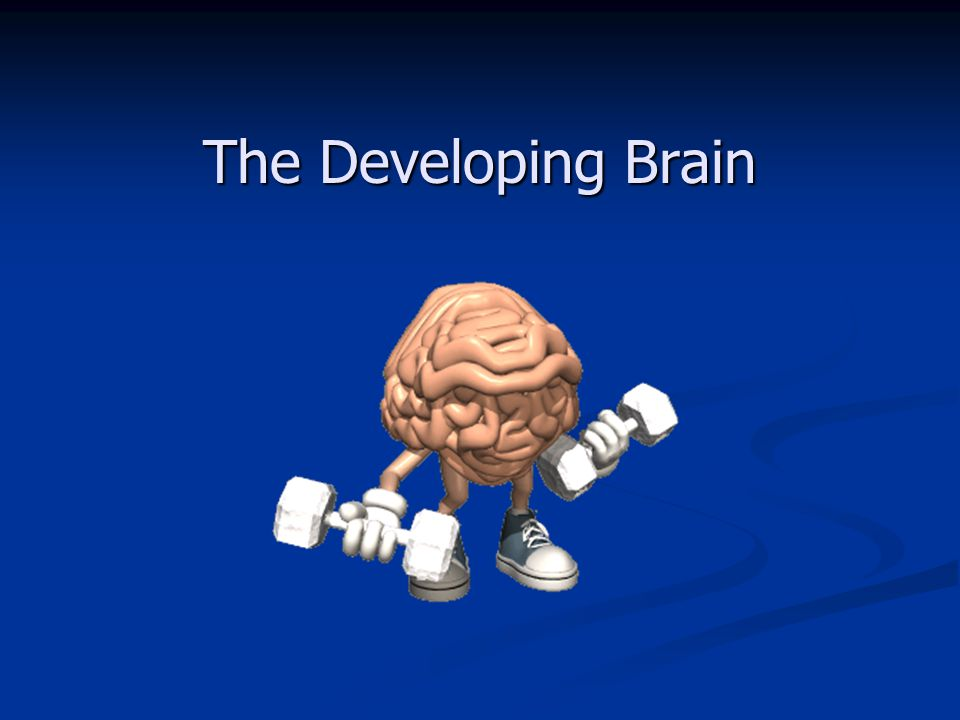 The Developing Brain 14