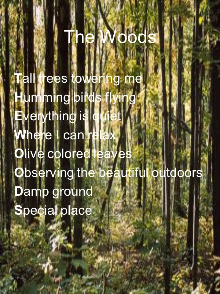 The Woods Tall trees towering me Humming birds flying