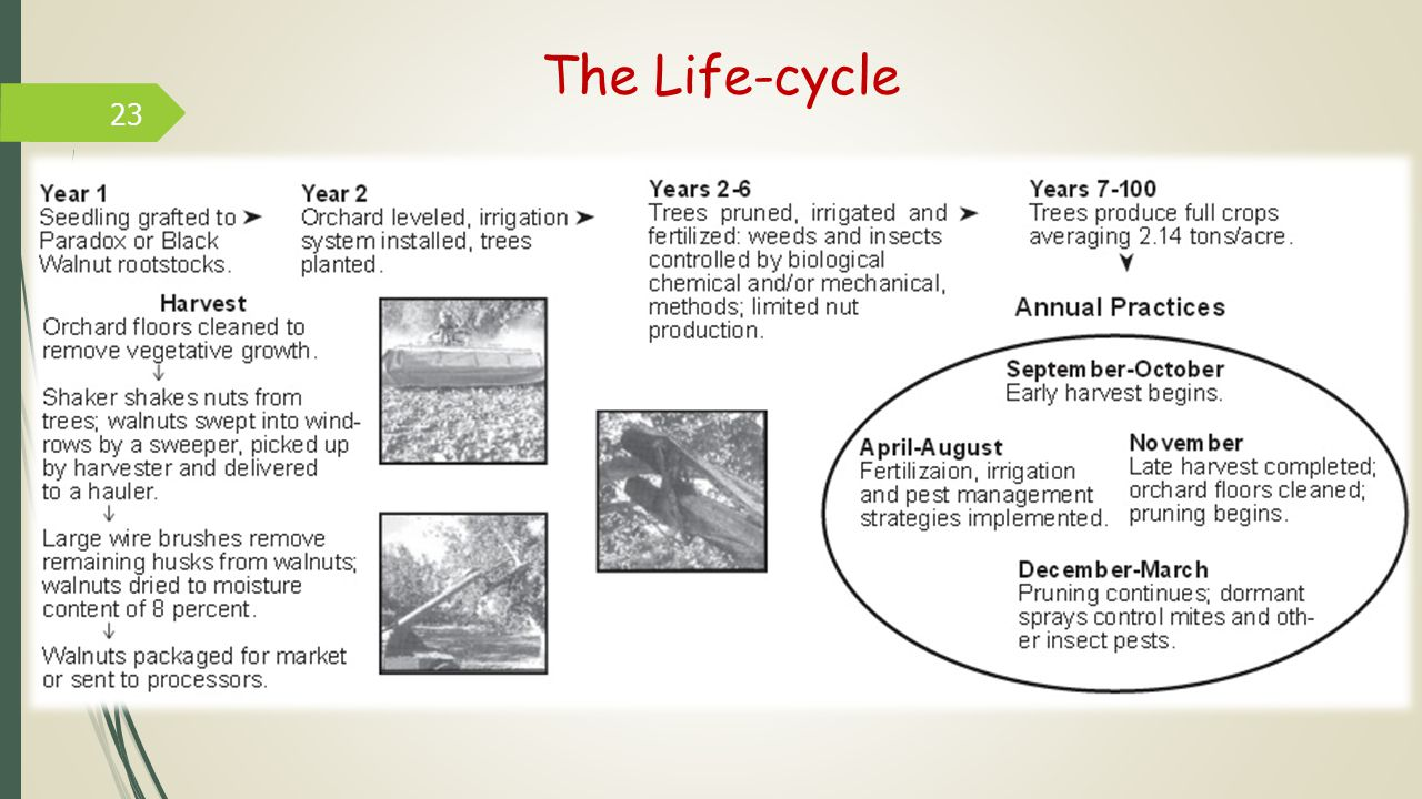 The Life-cycle