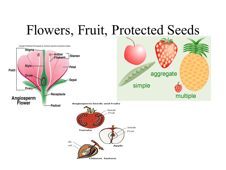 Flowers, Fruit, Protected Seeds
