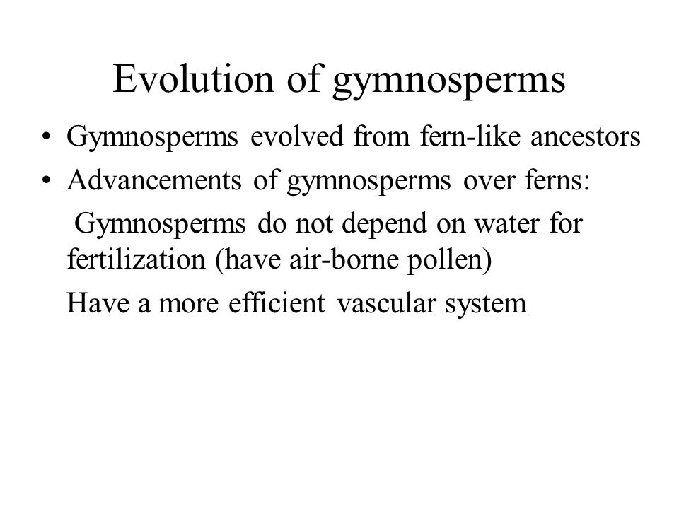 Evolution of gymnosperms