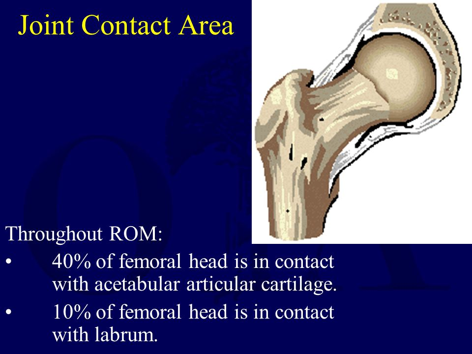 Joint Contact Area Throughout ROM: