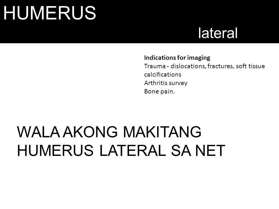 HUMERUS WALA AKONG MAKITANG HUMERUS LATERAL SA NET lateral