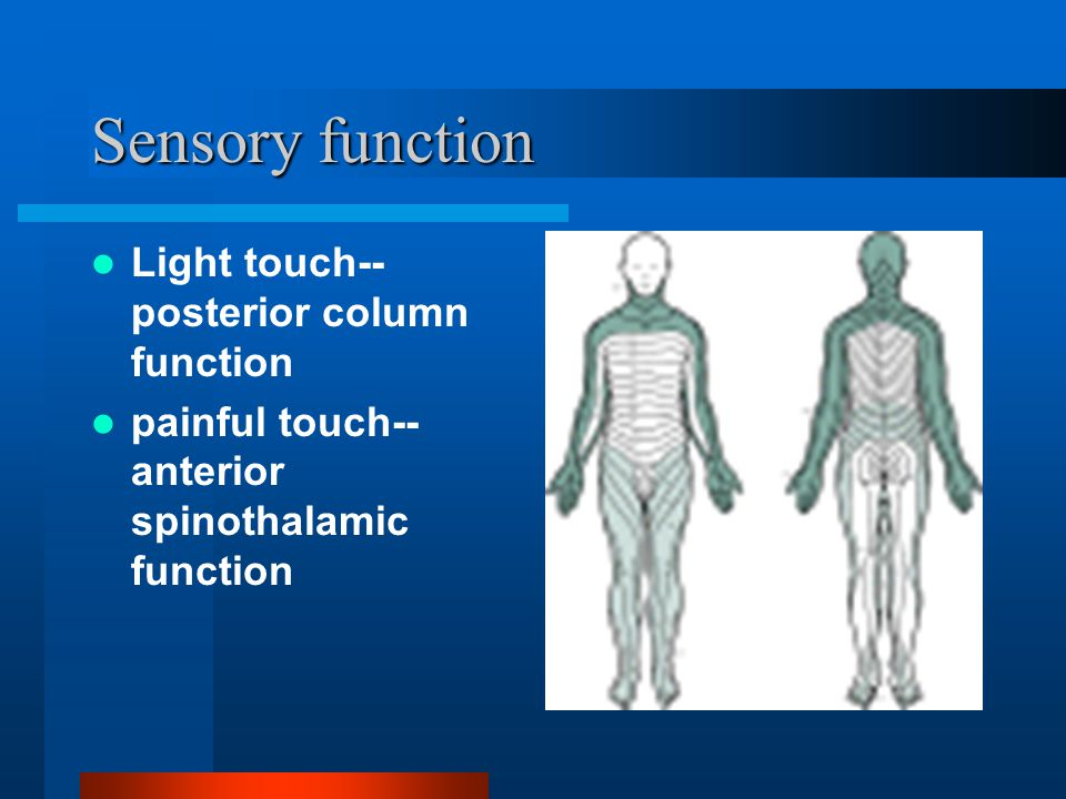 Sensory function Light touch--posterior column function