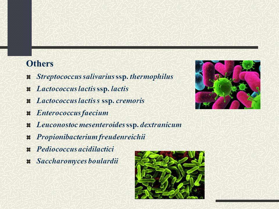 Others Streptococcus salivarius ssp. thermophilus