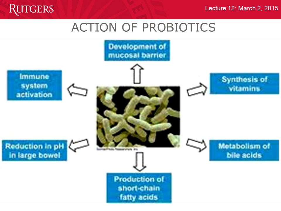ACTION OF PROBIOTICS