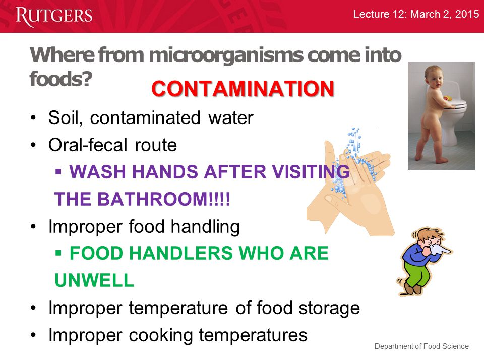Where from microorganisms come into foods