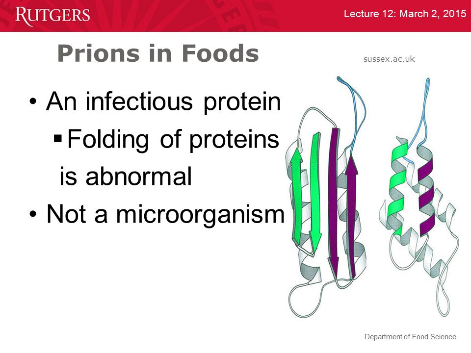 Prions in Foods sussex.ac.uk