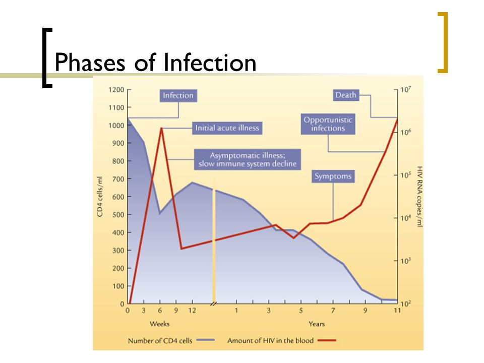 Phases of Infection 2