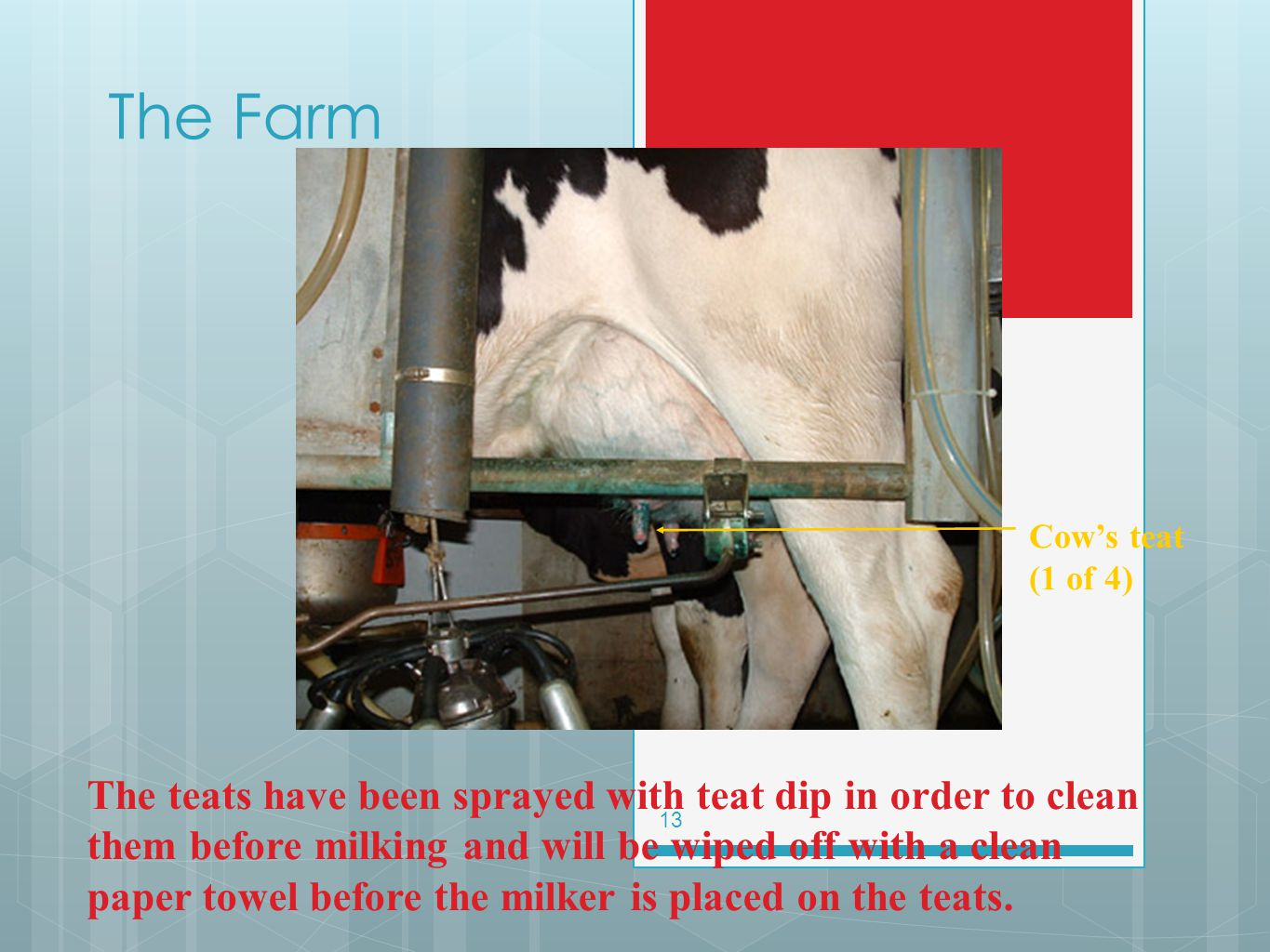 The Farm Cow's teat (1 of 4)