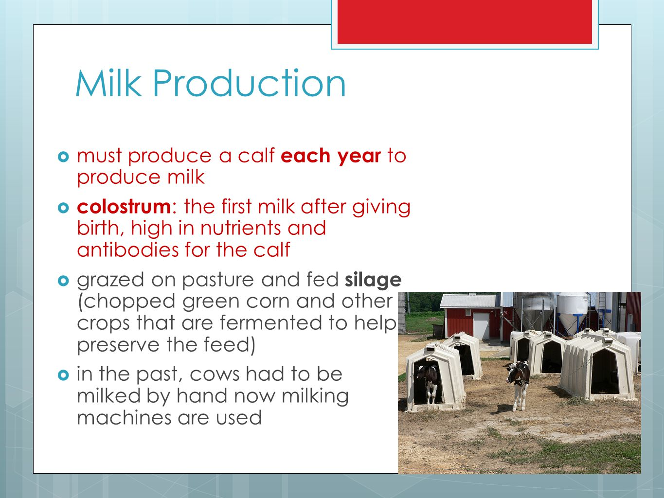 Milk Production must produce a calf each year to produce milk