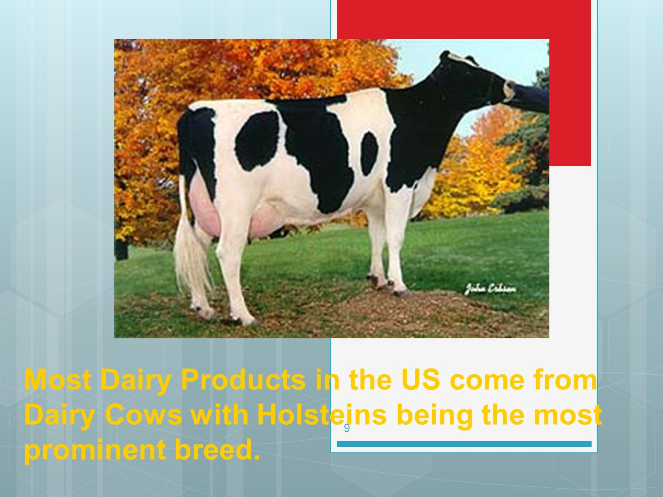Most Dairy Products in the US come from Dairy Cows with Holsteins being the most prominent breed.