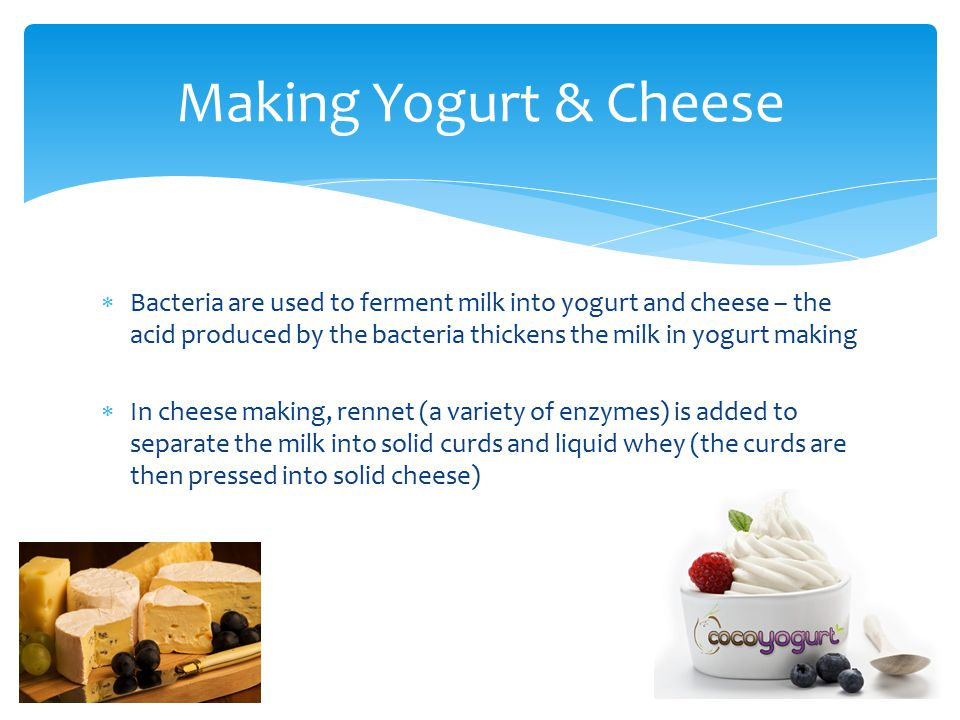 Making Yogurt & Cheese