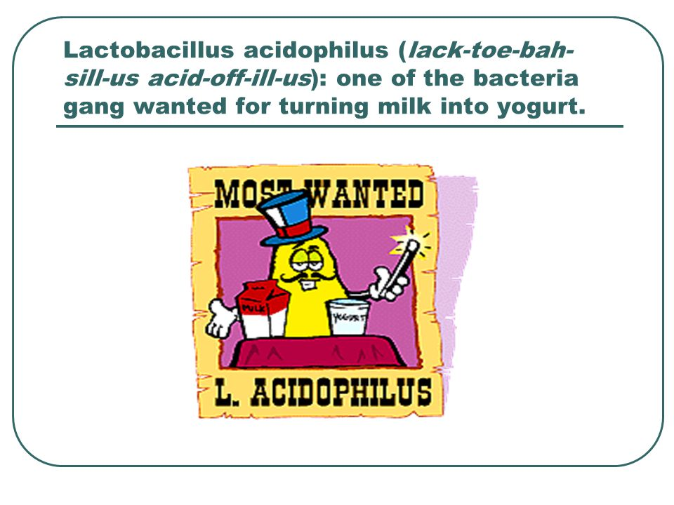 Lactobacillus acidophilus (lack-toe-bah-sill-us acid-off-ill-us): one of the bacteria gang wanted for turning milk into yogurt.