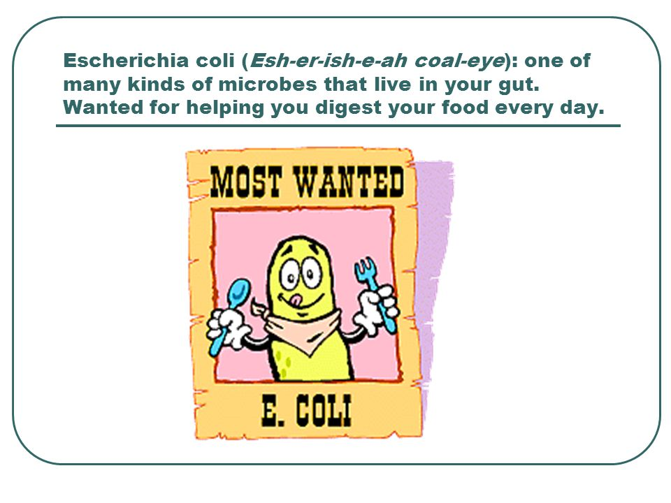 Escherichia coli (Esh-er-ish-e-ah coal-eye): one of many kinds of microbes that live in your gut.