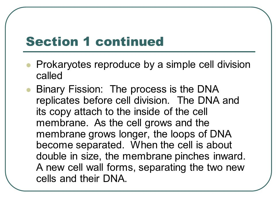 Section 1 continued Prokaryotes reproduce by a simple cell division called.