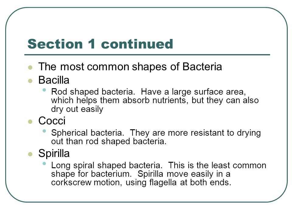 Section 1 continued The most common shapes of Bacteria Bacilla Cocci