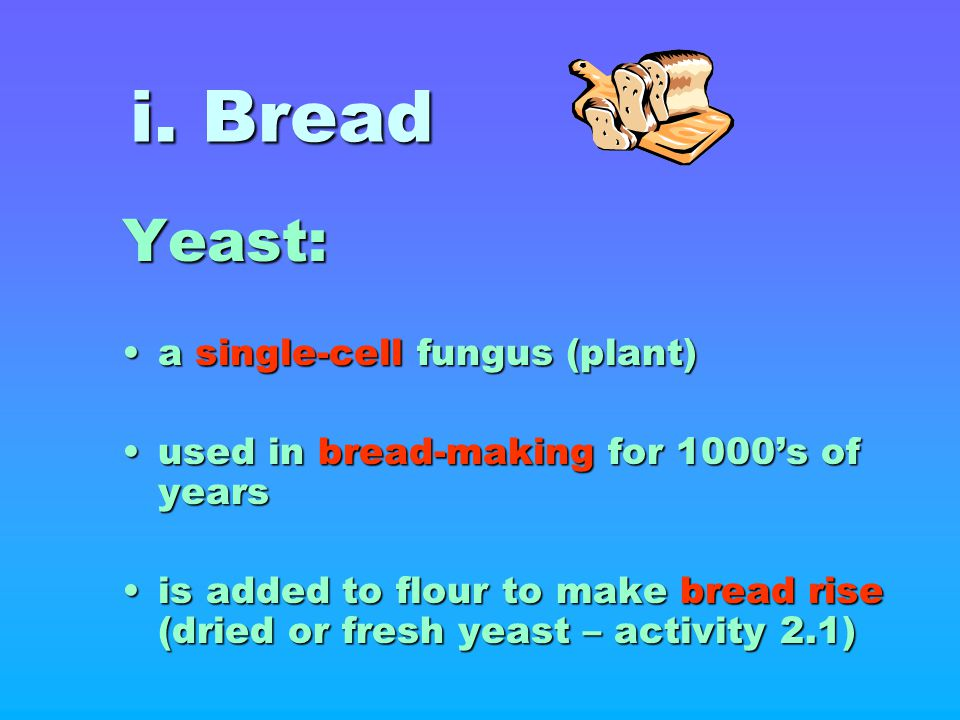 i. Bread Yeast: a single-cell fungus (plant)