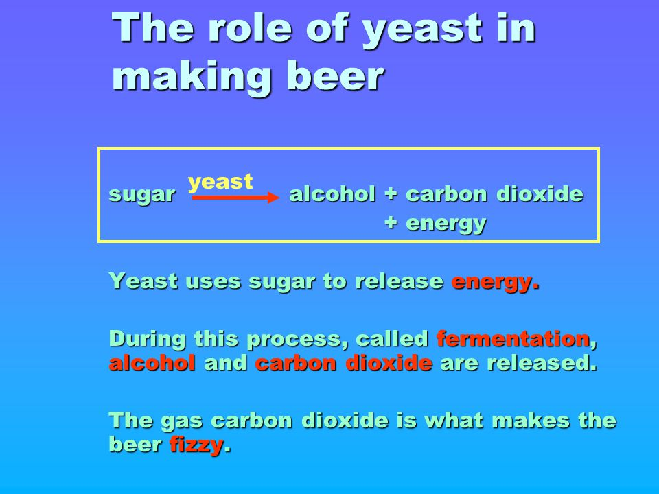 The role of yeast in making beer