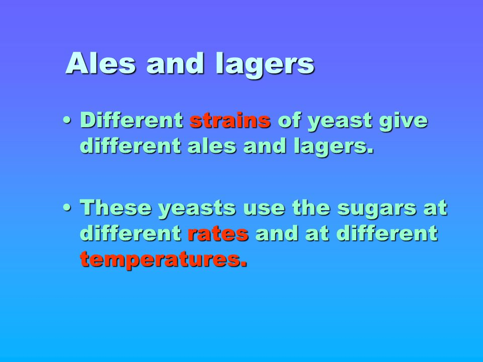 Ales and lagers Different strains of yeast give different ales and lagers.
